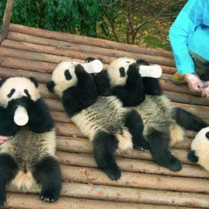 パンダ好きでなくてもキュンキュンしちゃう映画『PANDAS』予告編
